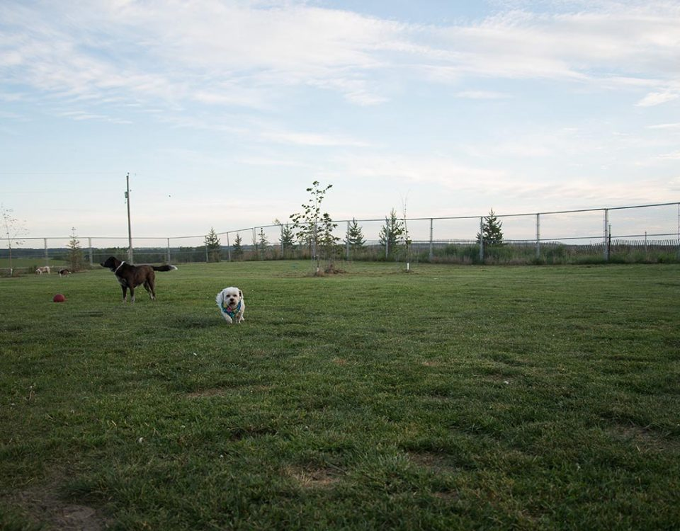 Old MacDonald Kennel off leash dogs